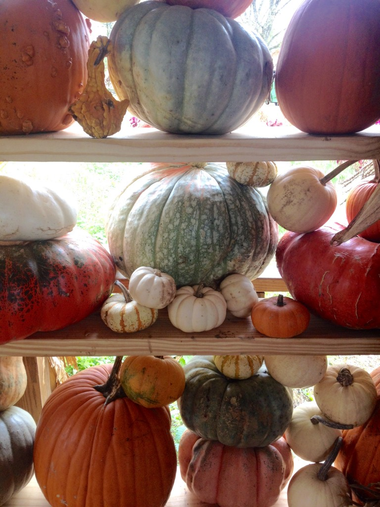 pumpkins on parade.
