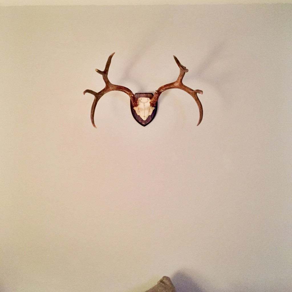 hung antlers